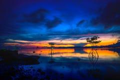 Kontur av mangroven i havet på solnedgången Royaltyfri Bild