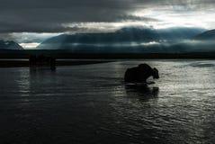 Kontur av mongolianyak som korsar floden i solnedgångligen Royaltyfri Bild
