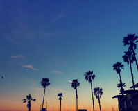 Kontur av palmträd på solnedgången Royaltyfria Bilder