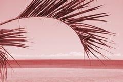 Kontur av palmträd på solnedgången på himmel- och havsbakgrund Rosa filter för tappning royaltyfri bild