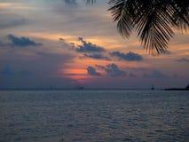 Kontur av palmtr?d p? solnedg?ngen och m?ngf?rgade moln royaltyfria bilder