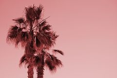 Kontur av palmträd på solnedgången Rosa filter för tappning royaltyfri fotografi
