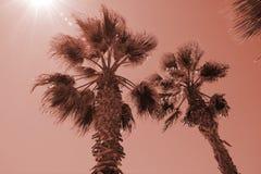 Kontur av palmträd på solnedgången Rosa filter för tappning arkivfoton