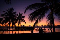 Kontur av palmträd på solnedgången, tappningfilter arkivbild