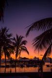 Kontur av palmträd på solnedgången, tappningfilter royaltyfri foto