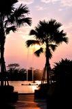 Kontur av palmträdet under soluppsättning Royaltyfri Foto