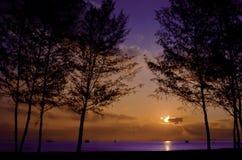 Kontur av Pine trädet under soluppgång på det indigoblå havet Backgro Royaltyfria Foton