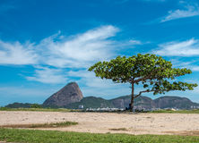 Kontur av sammanträdemannen i skuggan av trädet och Guanabaren arkivbilder