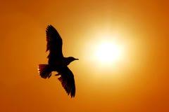 Kontur av seagullen Arkivfoton
