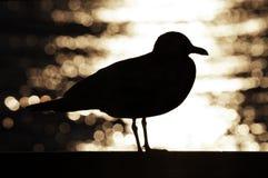Kontur av seagullen. Royaltyfri Foto