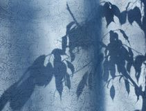 kontur av sidor och filialer p? en bl? gardin, gardiner eller tyll p? bakgrunden av solen arkivbild