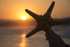 Kontur av sjöstjärnan på solnedgångbakgrund Sommarromantikerbakgrund royaltyfri bild