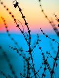 Kontur av torkade blommor och växter på en bakgrundssolnedgång Arkivfoto