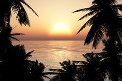 Kontur av träd i solnedgång Royaltyfria Bilder