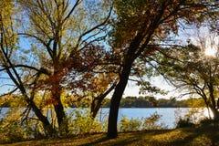 Kontur av träd längs flodbanken Royaltyfri Bild