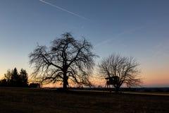 Kontur av träd med ett trädhus efter solnedgång arkivbilder