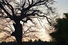 Kontur av träd under solnedgång i den södra foen Frankrike royaltyfri bild