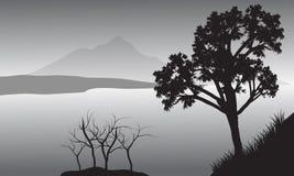 Kontur av trädet i sjön Arkivbild