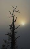 Kontur av trädet i soluppgång Arkivbild
