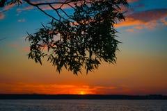 Kontur av trädet med sjön och himmel på bakgrunden på solnedgången royaltyfria foton