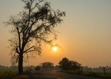 Kontur av trädet och vägen på soluppgång Arkivfoto
