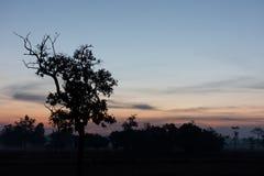 Kontur av trädet på skymning med himmel Royaltyfria Bilder