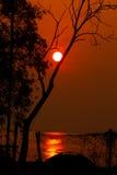 Kontur av trädet på soluppgångtid Royaltyfri Bild