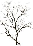 Kontur av trädfilialer Royaltyfria Bilder