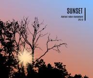 Kontur av trädfilialer med fåglar på dess på solnedgånghimmelbakgrund vektor Stock Illustrationer