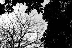 Kontur av trädfilialer på vit bakgrund Arkivfoto