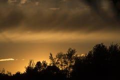 Kontur av trädlinjen, guld- solnedgång royaltyfri foto