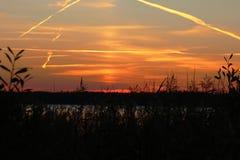 Kontur av tropiskt gräs över solnedgången på sjön royaltyfria foton