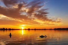 Kontur av två svanar under solnedgång med härliga himlar i sjöZoetermeerse plas royaltyfria bilder