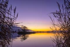 Kontur av vassen på den fridfulla sjön Royaltyfri Foto