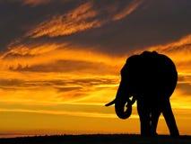 Kontur för afrikansk elefant på solnedgången i Afrika Fotografering för Bildbyråer