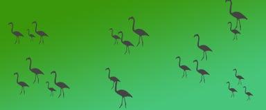 Kontur för flock för grupp för flamingo för titelradbakgrundsfåglar royaltyfri illustrationer