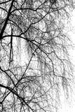 Kontur för trädfilial Royaltyfri Foto