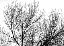 Kontur för trädfilial Royaltyfria Foton