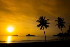 Kontur för två palmträd på solnedgång Arkivbild