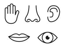 Kontur ikona ustawiająca pięć ludzkich sensów: wzroku oko, odoru nos, słucha ucho, dotyk ręka, smaku usta z jęzorem royalty ilustracja