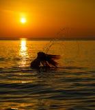 Kontur till den härliga flickan på solnedgången Arkivbild