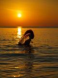 Kontur till den härliga flickan på solnedgången Royaltyfri Foto