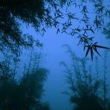 Konturbambu Forest China Environment Concept Royaltyfri Fotografi