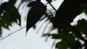 Konturbladet som blåser från vind i trädgård, medan hårt, regnar att falla lager videofilmer