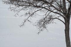 Konturen av trädet Royaltyfri Foto