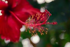 Konturen von Blumen auf einem weißen Hintergrund Lizenzfreie Stockfotos