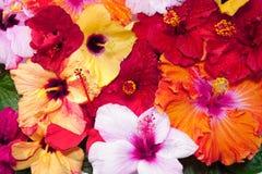 Konturen von Blumen auf einem weißen Hintergrund Stockbilder