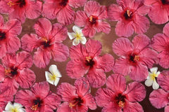 Konturen von Blumen auf einem weißen Hintergrund Stockfoto
