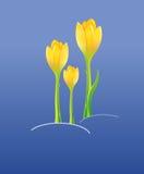Konturen von Blumen auf einem weißen Hintergrund Stockbild