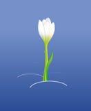 Konturen von Blumen auf einem weißen Hintergrund Stockfotos